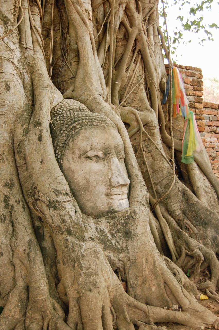 木の根元に取り込まれた仏像の頭