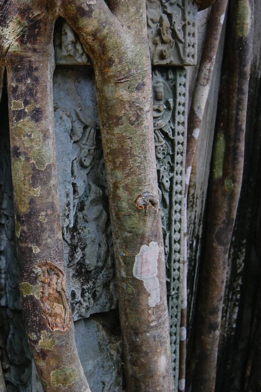 木に覆われた遺跡