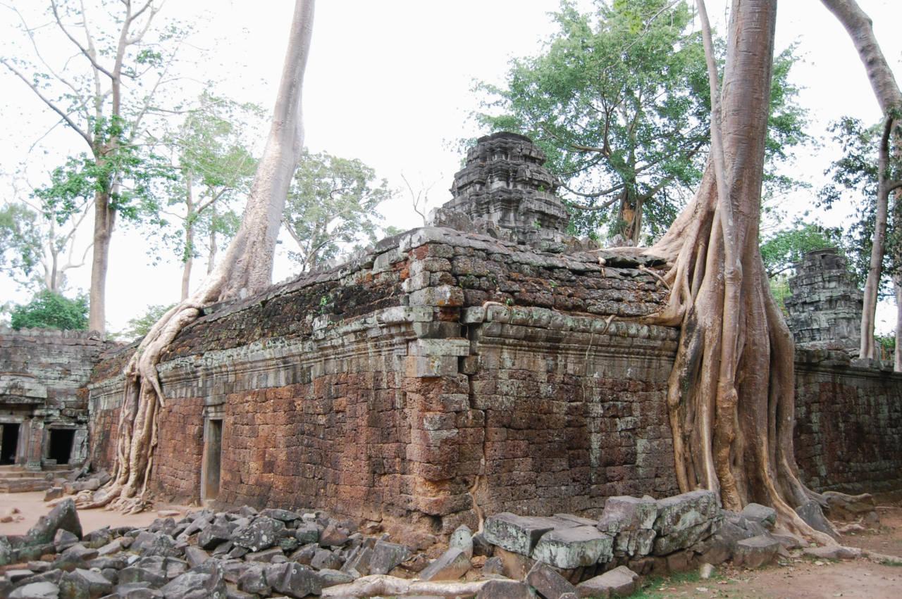 タ・プローム ガジュマルの木