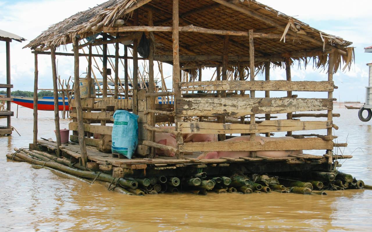 湖上の豚小屋