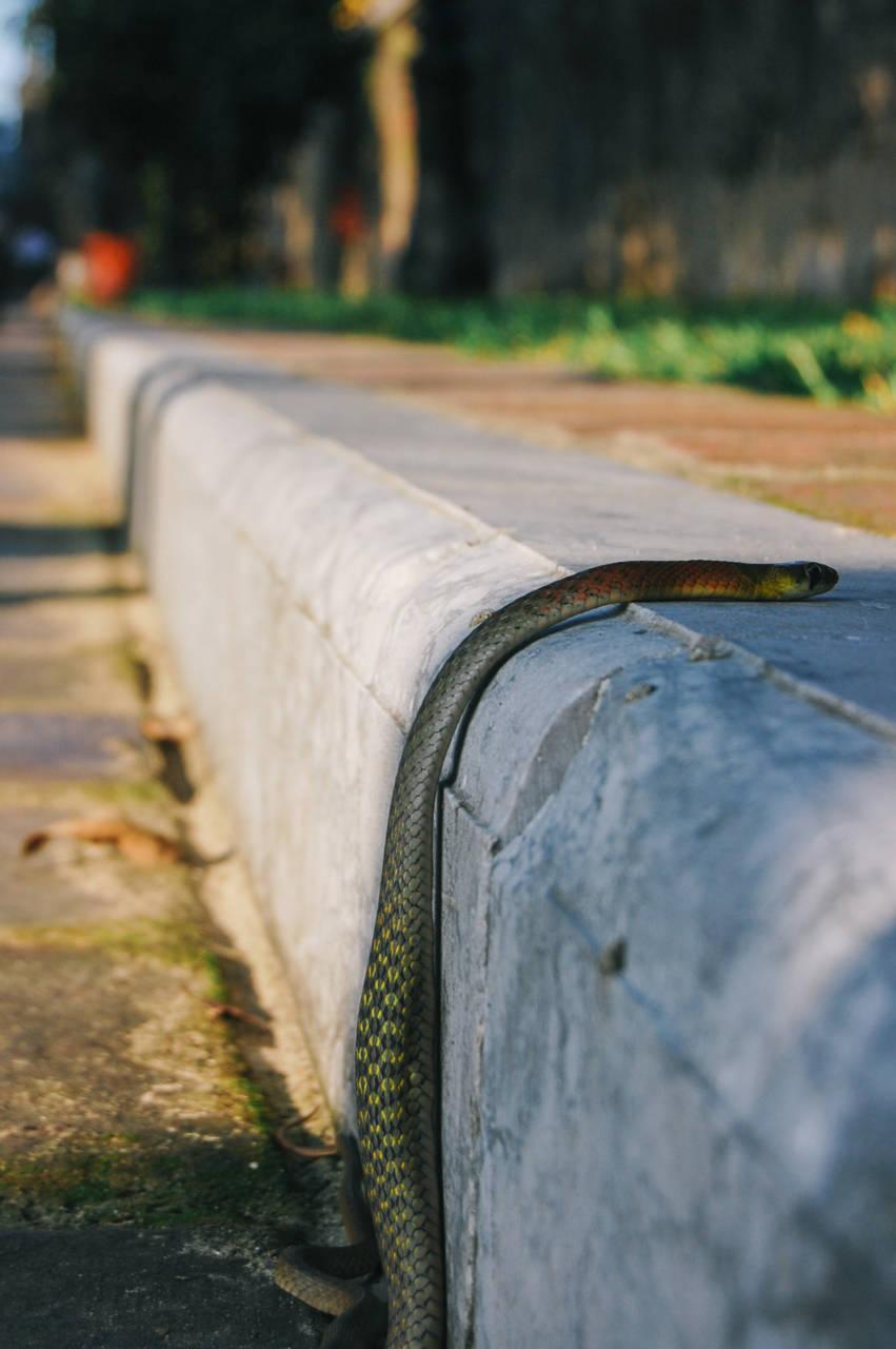 フエの王宮 蛇