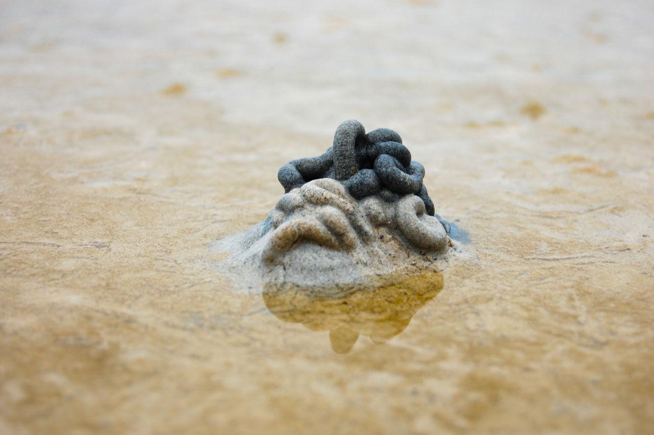 タオ島 タマシギゴカイの糞