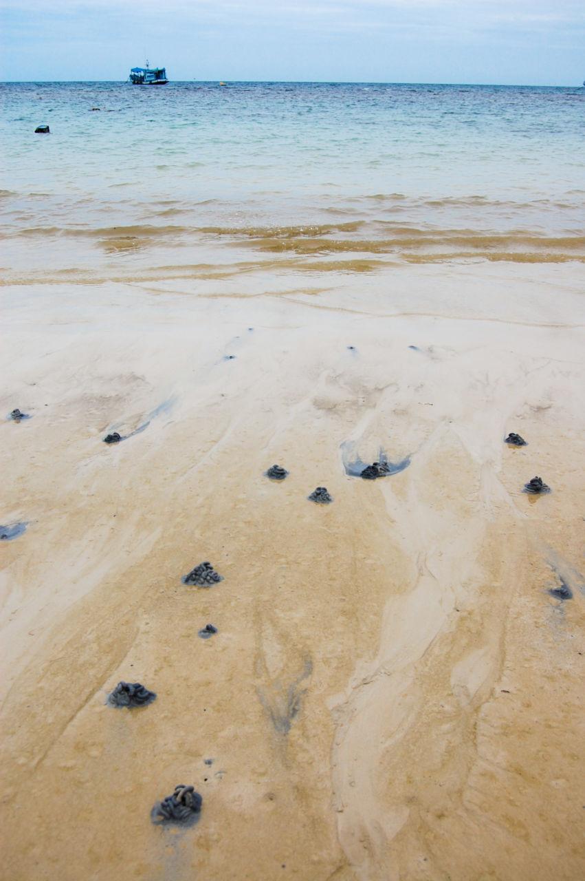タオ島 サイリービーチ  タマシギゴカイ 糞