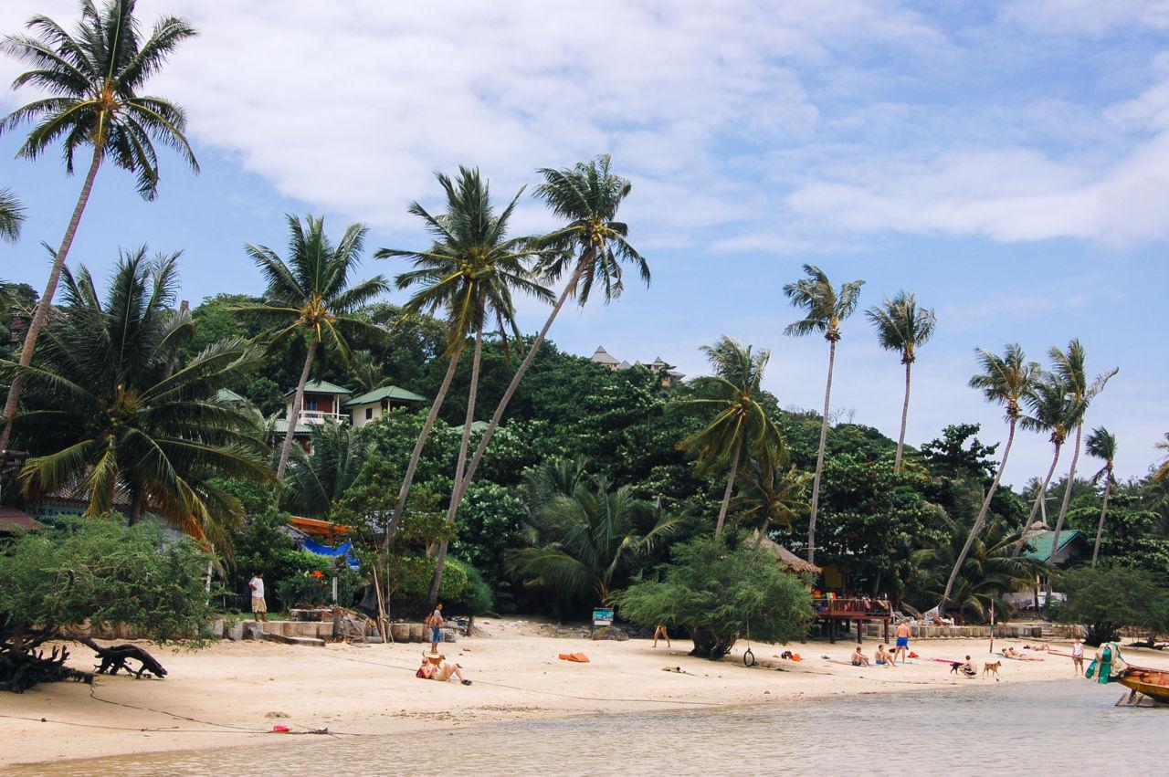 タオ島 チャロックバンカオ ビーチとヤシの木