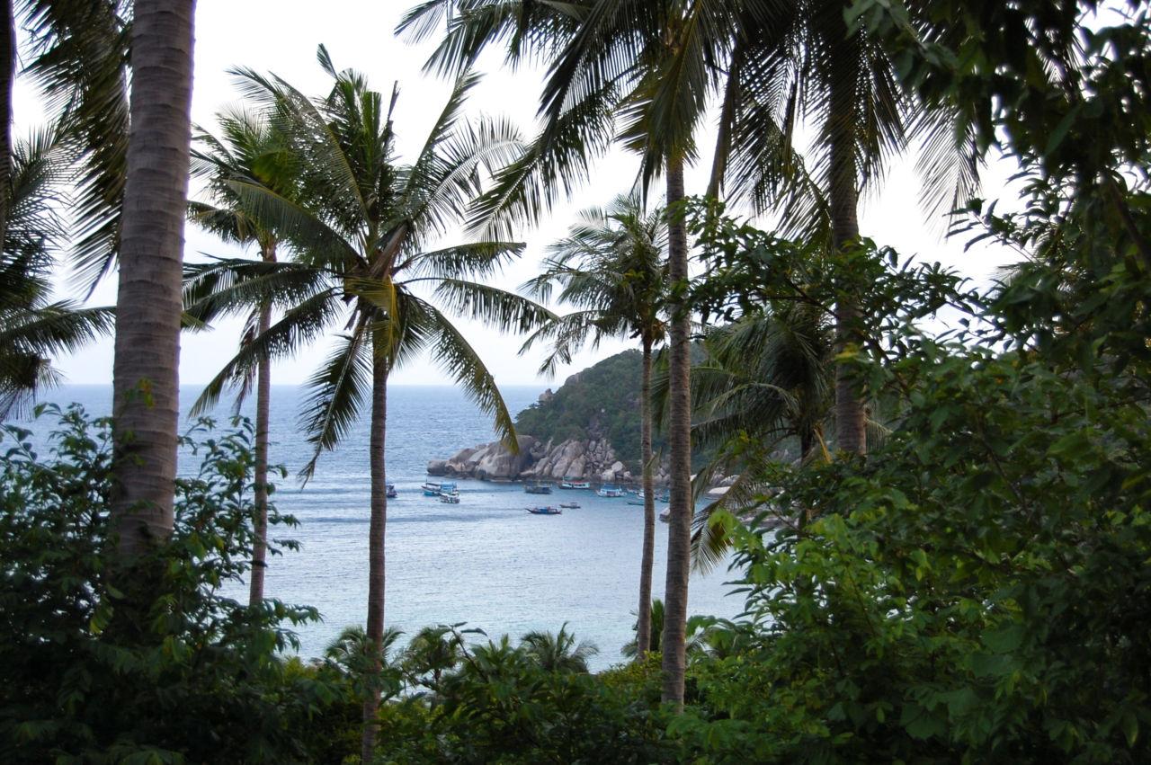 タオ島 ヤシの木とビーチ
