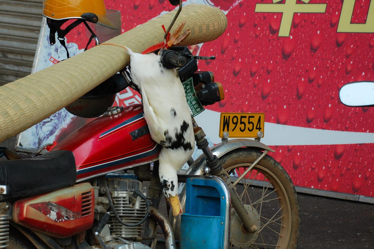 桂林 バイク 鳥