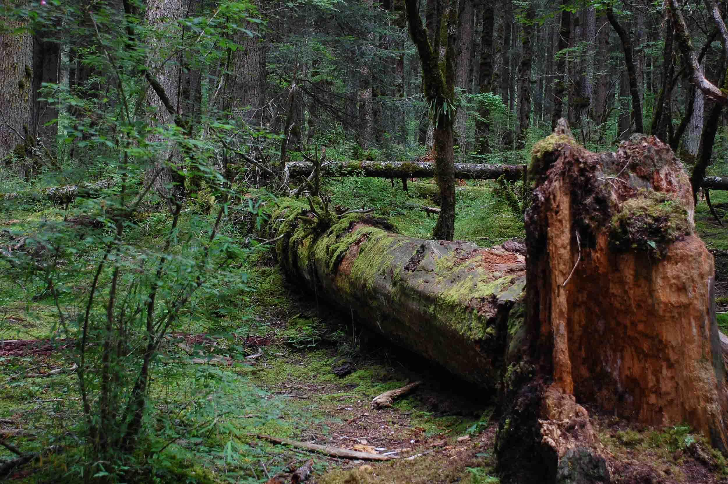 原始森林地区 九寨溝