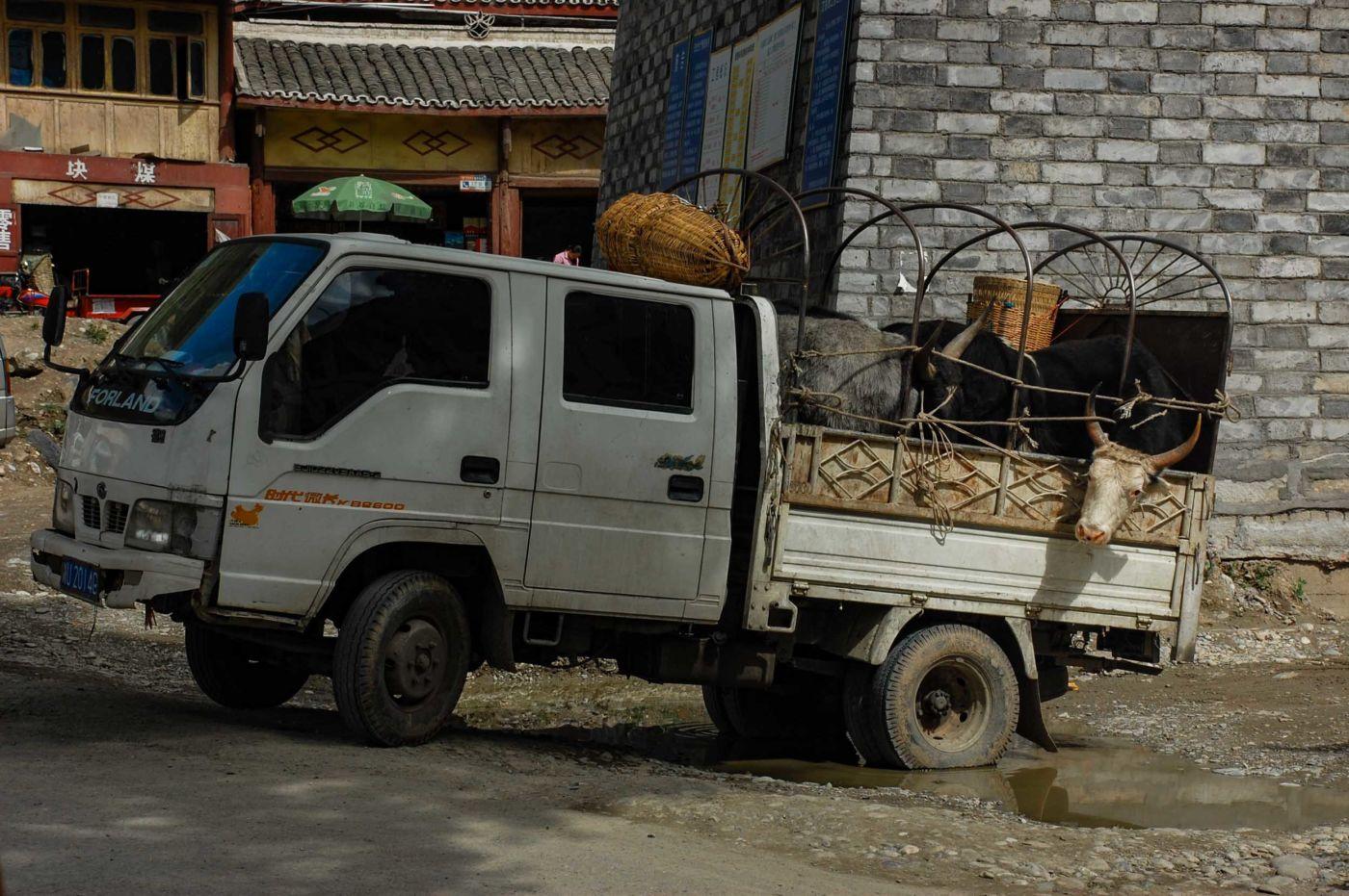 松潘 ヤクを運搬するトラック